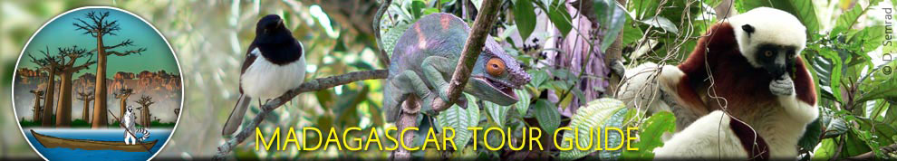 Indri tour | Nest of Dream tour | Madagascar East Tours | Green tour | Zahamena Tour