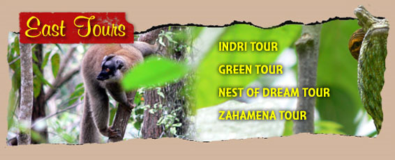 Madagascar Eat Tours